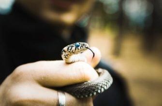 Как вести себя при встрече со змеей