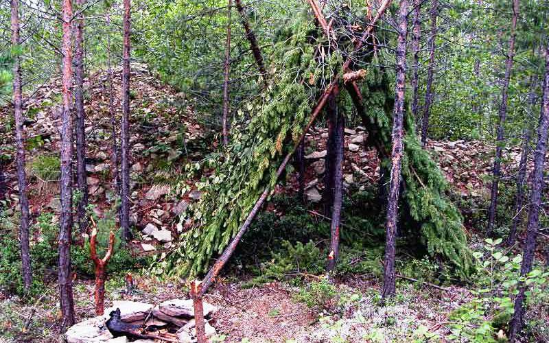 Как выжить в лесу