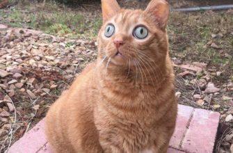 Рыжий кот с необычными глазами