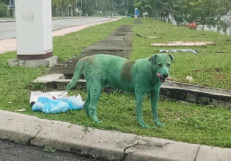 Пес зеленого цвета