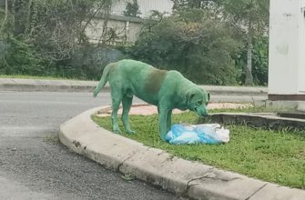 Собака зеленого цвета