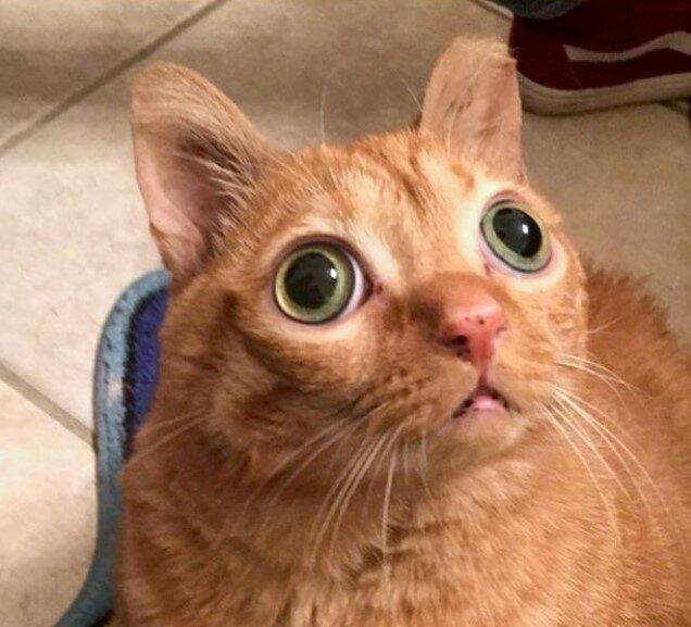 котик по имени Potato