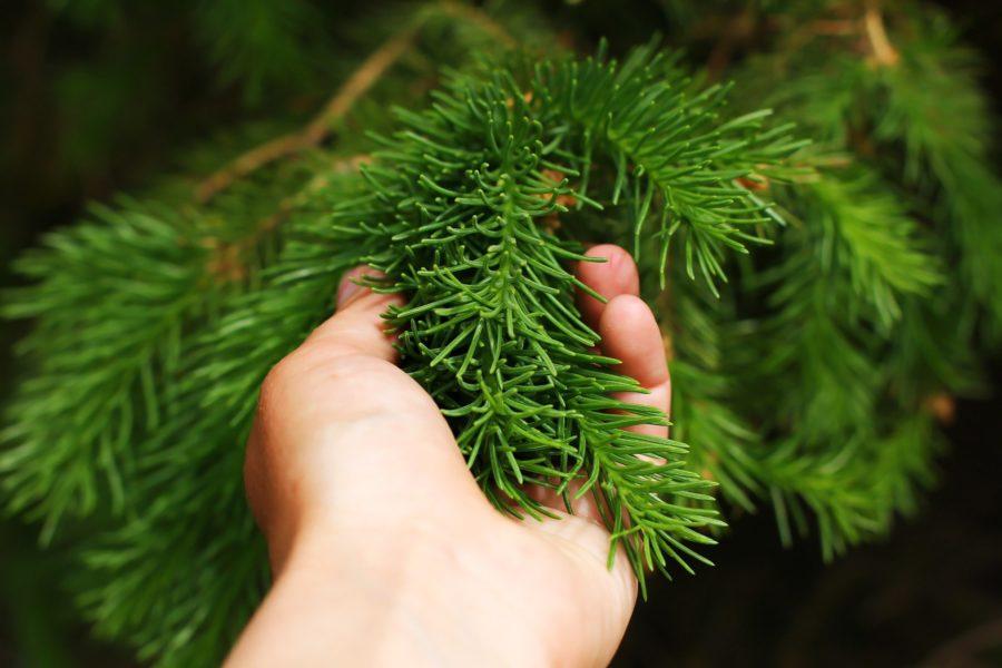 Проверка елки на осыпаемость