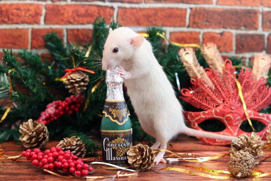 Наступающий новый год крысы