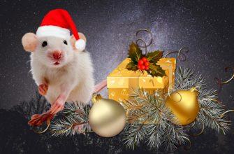 Китайский календарь начинается с крысы