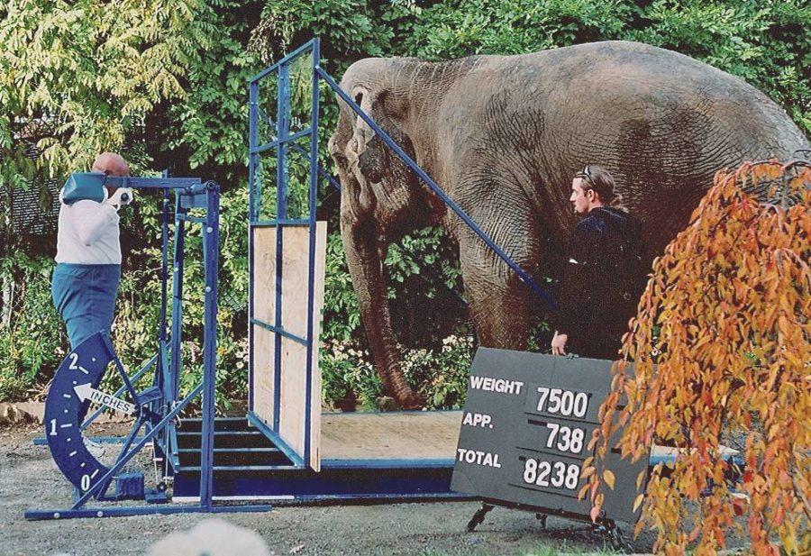 Шри Чинмой поднял слона