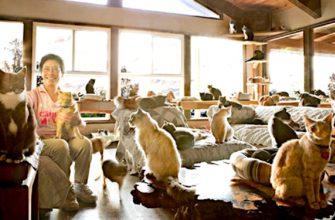Женщина приютившая больше тысячи кошек