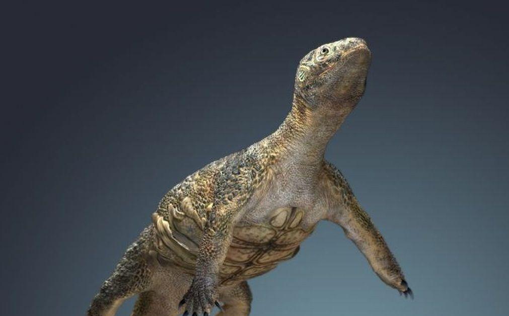 Первые черепахи