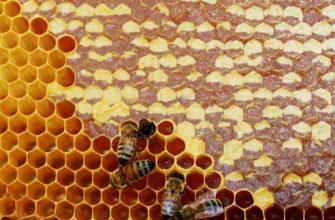 Самый дорогой мед