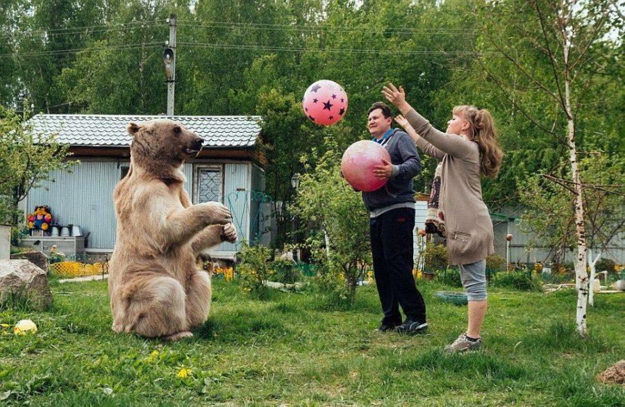 Медведь семьи Пантелеенко