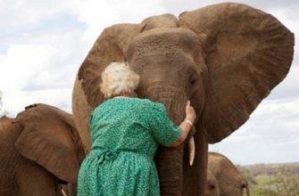 Женщина обнимающая слона