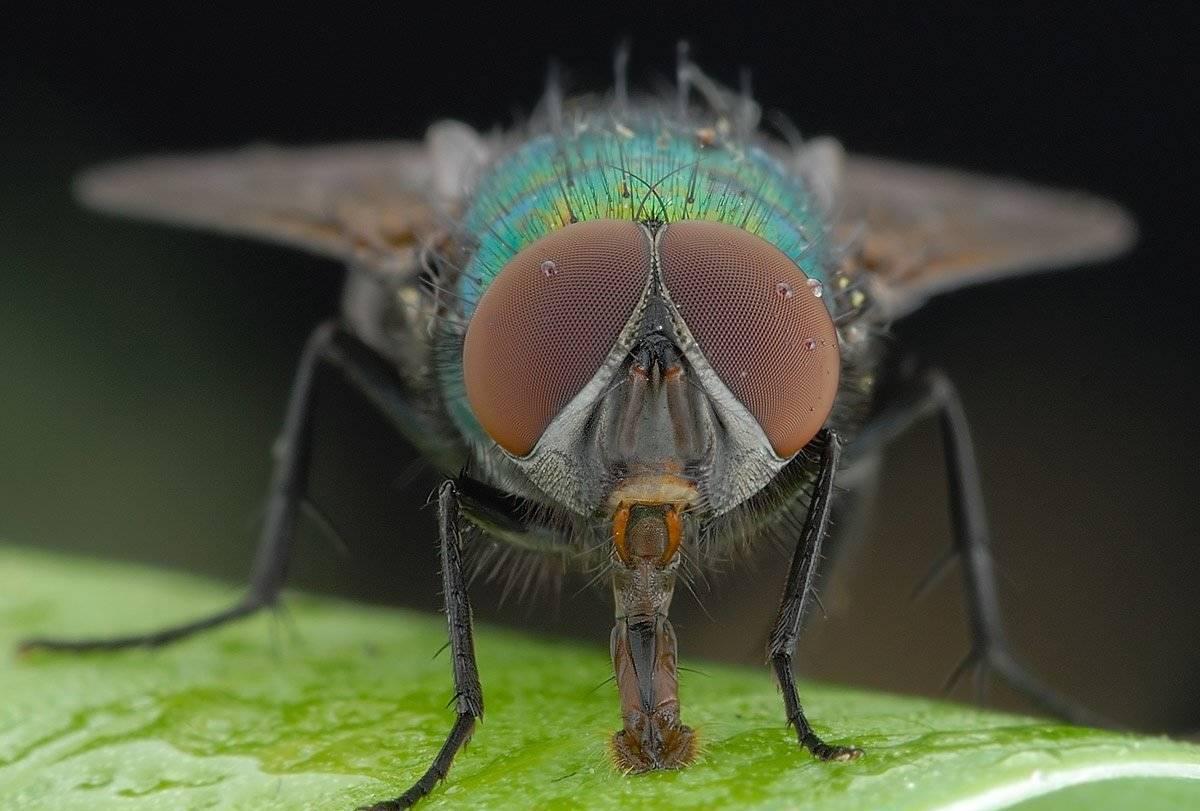 Жизнь без насекомых