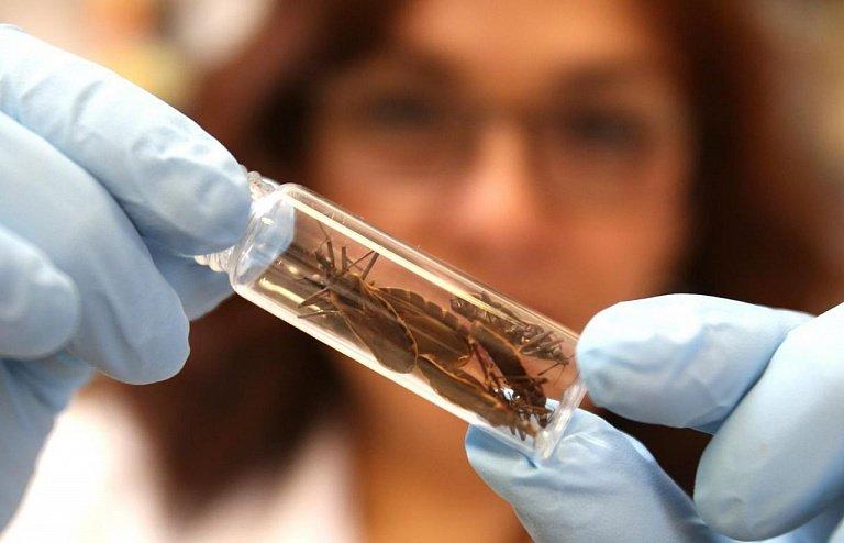 Болезнь Шагаса от насекомого