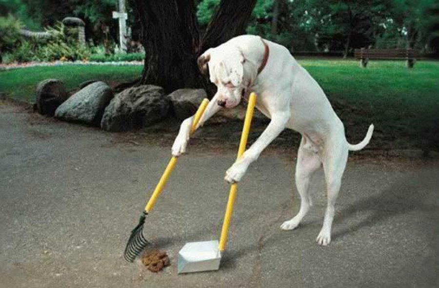 Убирающая за собой собака