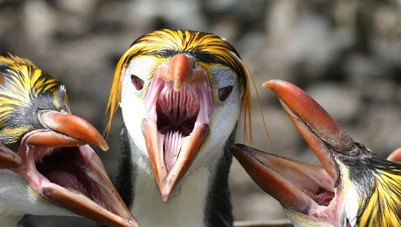 Почему современные птицы избавились от зубов?