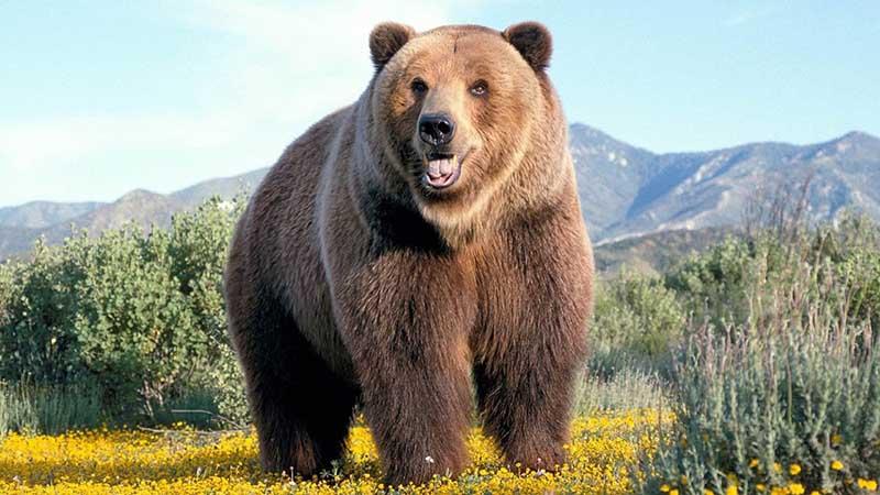 Как изменилось отношение к медведю