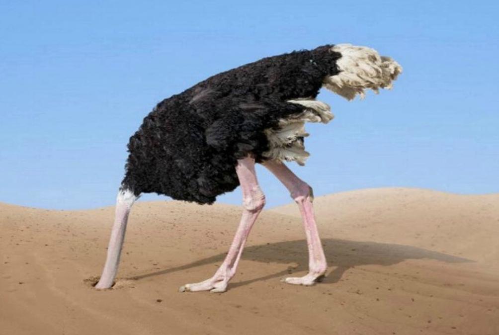 Страус головой в песке
